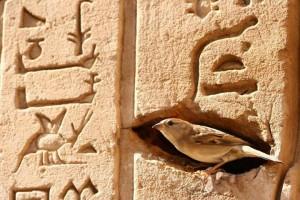 Bird Hieroglyphics